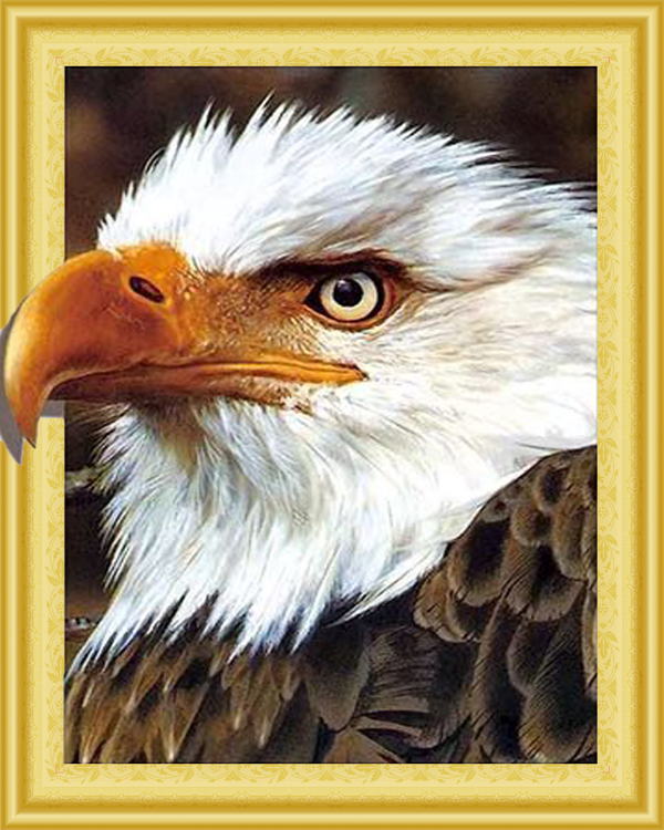 WD 017 diamond painting 3 D framed Eagle 40 x 50