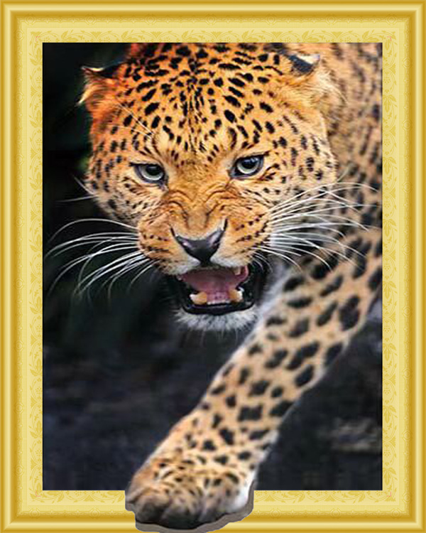 D 046 diamond painting 3 D framed Panther 40 x 50