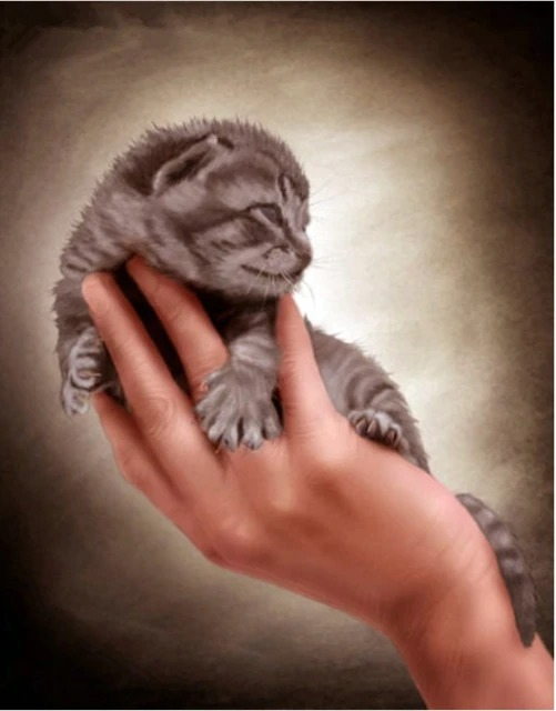 Diamond Painting Kitten in hand