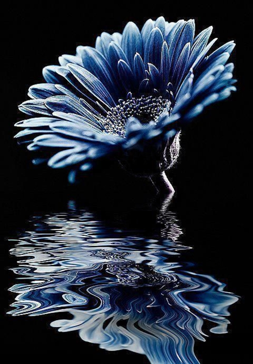 Diamond Painting gerbera blauw