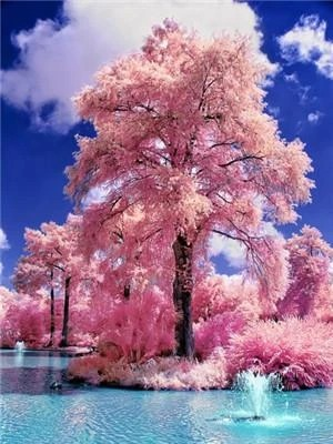 Diamond Painting bomen roze